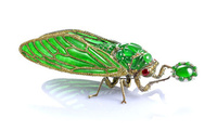 Is it okay if a bejeweled insect lands on your lapel?
