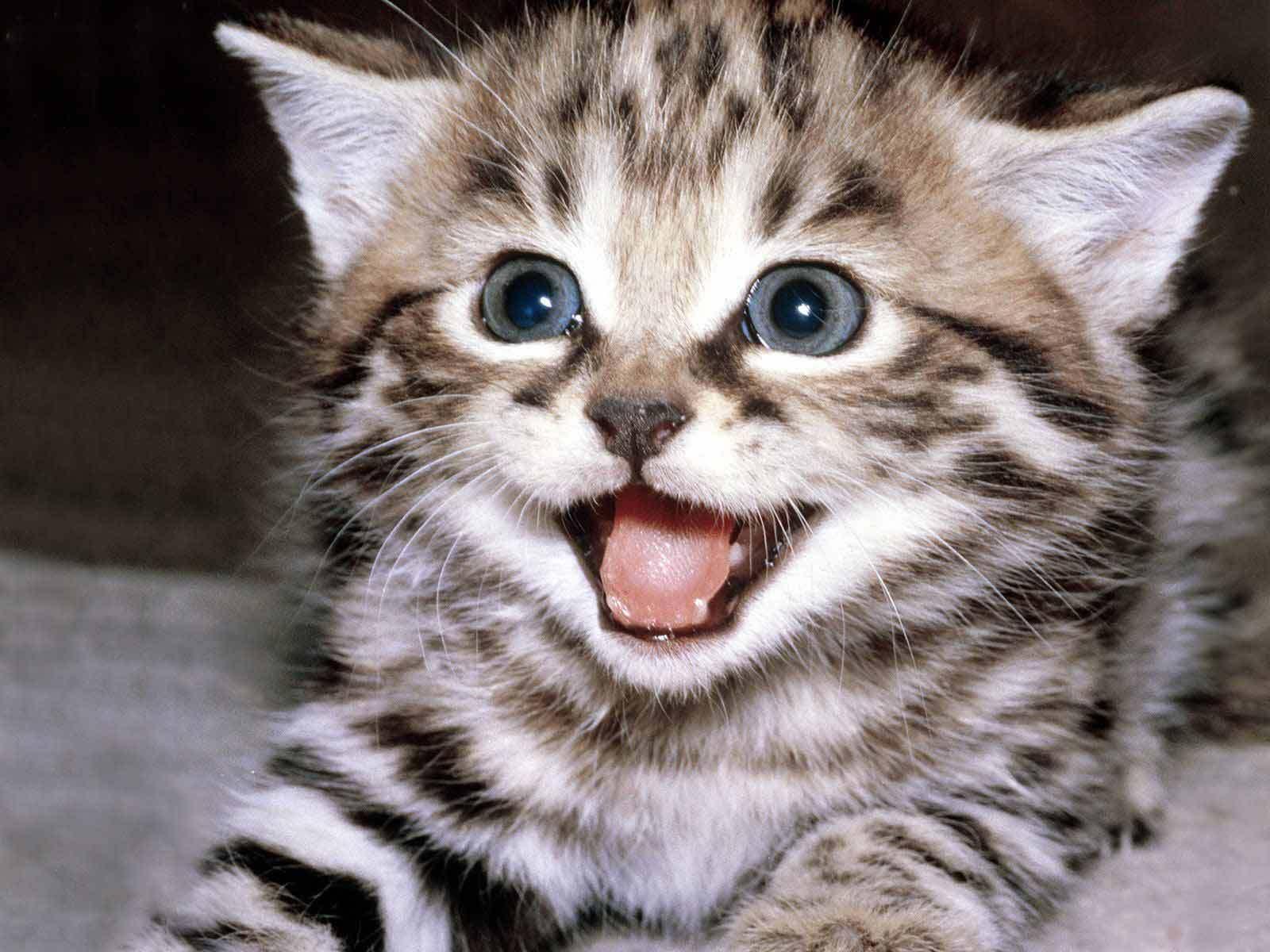 cute-kittens-12929201-1600-1200.jpg